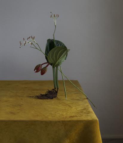 dominik_tarabanski_-_roses_for_mother_paris_01 (1)
